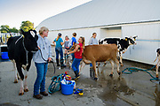 16 JULY 2020 - BOONE, IOWA: People and their cows at the cow wash on the first day of the Boone County Fair in Boone. Summer is county fair season in Iowa. Most of Iowa's 99 counties host their county fairs before the Iowa State Fair. In 2020, because of the COVID-19 (Coronavirus) pandemic, many county fairs were cancelled, and most of the other county fairs were scaled back to concentrate on 4H livestock judging. Boone county scaled back its fair this year. The Iowa State Fair was cancelled completely. Boone County Emergency Management did not approve going ahead with the fair, and has advised anyone who goes to the fair to take precautions and monitor themselves for symptoms of the Coronavirus.             PHOTO BY JACK KURTZ