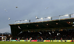 A flock of seagulls descend on the pitch during the Aviva Premiership match at Twickenham Stoop, London.