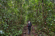 People walking a track in the rainforest of Gundung Gading National Park, Sarawak, Borneo (Malaysia).