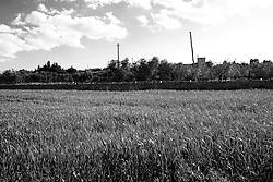 Reportage sul comune di Alessano per il progetto propugliaphoto..Un campo di foraggio e panorama del'insediamento rupestre di Macurano..Macurano è un villaggio rupestre considerato un luogo di scambio e commercio, simbolo della cultura dell'olio per la presenza ad oggi di alcune tracce nelle grotte e di frantoi funzionanti nella zona. L'insediamento è caratterizzato da una serie di grotte sia naturali che scavate nel calcare, cisterne per la raccolta dell'acqua, sistemi di canalizzazione che scendono da Montesardo, viottoli, scalette e vie più larghe con antiche tracce di carri..Si ritiene che in questo sito, un vero e proprio centro abitato ben organizzato distante circa quattro km dalla costa, i monaci basiliani scappati dall'oriente in seguito alla lotta iconoclasta, trovarono rifugio e si dedicarono all'agricoltura..L'area del villaggio rupestre fu sicuramente sfruttata in epoche successive, lo prova l'esistenza di ben tre masserie di cui una fortificata e i resti di una serie di costruzioni che fanno parte dei numerosi esempi di architettura rurale presenti in questo territorio. .Il complesso masserizio, denominato Macurano, edificato probabilmente nel Cinquecento include la Masseria di Santa Lucia e la cappella di Santo Stefano. La Masseria è dominata dal nucleo originario, ovvero dalla torre cinquecentesca coronata da beccatelli a sostegno del parapetto aggettante del terrazzo sommitale.