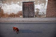 Wiener dog in Gibara, Holguin, Cuba.