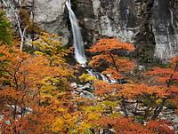 Bright red autumn foliage at Salto Chorrillo, Los Glaciares National Park, Argentina