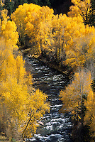 Fall color surrounds the San Miguel River in southwest Colorado.