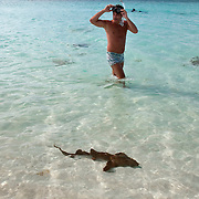Young Nurse Shark at Grace Bay, Providenciales, Turks & Caicos