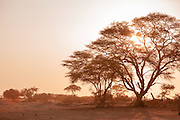 Sunlight shining through tree, Sun setting, The Kaokoveld Desert, Kaokoland, Northern Namibia, Southern Africa