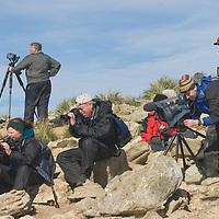 Tourists photograph a Black Browed Albatross rookery on New Island in Britain's Falkland Islands.
