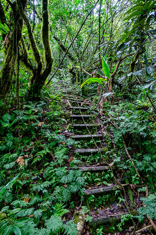 """there are a total of 56 """"ladders"""" and 786 steps up this trail to the top of Mount Alava. We got our workout, for sure."""