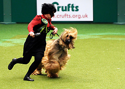 © Licensed to London News Pictures. 11/03/2012. Ah Afghan hound and it's owner takes a turn in the ring as they compete for the Best of Breed in the Hound Section of the final at the 2012 Crufts final at the Birmingham NEC Arena.   Photo credit: Alison Baskerville/LNP