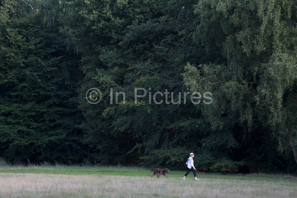 """Woman taking her dog for a walk with her dog ball thrower at hand. Hampstead Heath (locally known as """"the Heath"""") is a large, ancient London park, covering 320 hectares (790acres). This grassy public space is one of the highest points in London, running from Hampstead to Highgate. The Heath is rambling and hilly, embracing ponds, recent and ancient woodlands."""