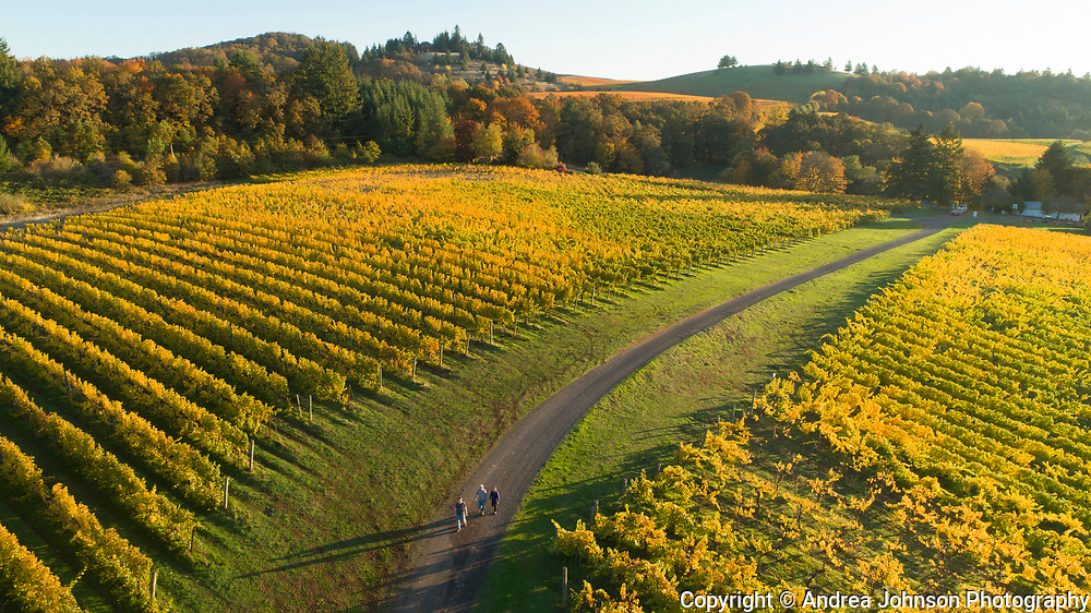 Drone's eye view aerial over Bethel Heights Vineayrd & winery, fall colors, Eola-Amity Hils AVA, Willamette Valley, Oregon