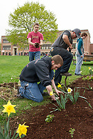 "Adam Yokum, Treaver Blake and Christopher Morales work in the flower garden in front of Laconia High School Saturday morning as part of the seniors ""clean up"" day to keep with the scheduled graduation date of June 6th.  (Karen Bobotas/for the Laconia Daily Sun)"