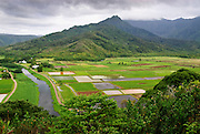A view from above Hanalei Valley shows the taro fields covering the valley floor.