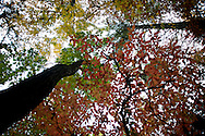 Primary colors blend in the Pisgah National Forest as trees change color at various rates