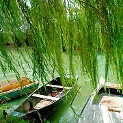 rowboats at lake bellow green willow