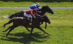 Muntahaa ridden by jockey Jim Crowley (top) goes head to head with Chemical Charge ridden by Oisin Murphy on their way to winning the Dubai Duty Free Finest Surprise Stakes during day two of the Dubai Duty Free Spring Trials & Beer Festival at Newbury Racecourse.