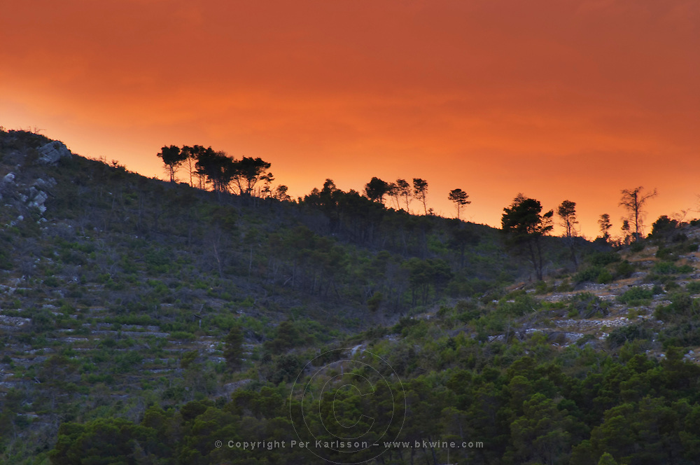 Mountain top at sunset on the Korcula island with pine trees in silhouette on the crest against an orange sky Prizba village. Korcula Island. Prizba, Riva Apartments, Danny Franulovic. Korcula Island. Dalmatian Coast, Croatia, Europe.