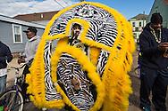 2/17/15, New Orleans, LA, Mardi Gras Day,  The Fi-Yi-Yi  Mardi Gras Gras Indian Tribe lead their own Mardi Gras Parade in the 7th Ward.