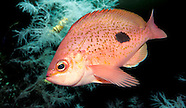 New Zealand Marine species underwater