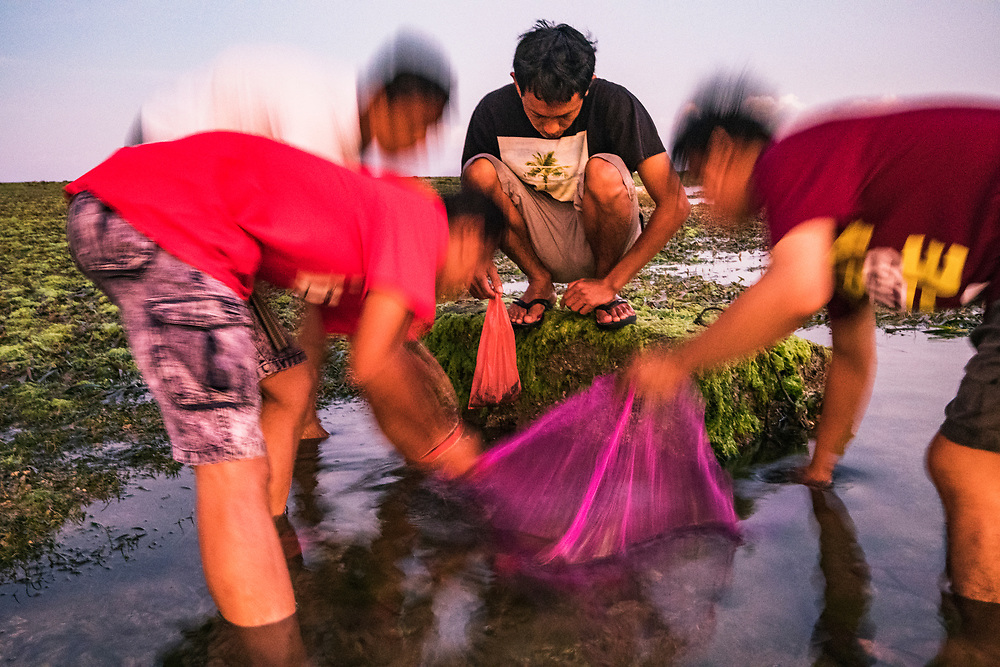 Young men use a make-shift net to catch small fish for food in a seagrass bed at low tide in Bali, Indonesia.