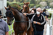 Horse trainers in masks after Race 3, Race in Sydney with Go Racing.<br /> Vodafone Derby Day at Ellerslie Race Course, Auckland on Sunday 7th March 2021 during lockdown level 2.<br /> Copyright photo: Alan Lee / www.photosport.nz