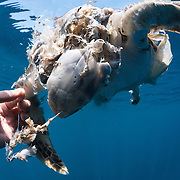 Dead Marine Life
