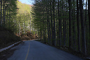 Greece, Macedonia, Korifi village a country road through a forest