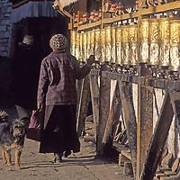 CHINA, TIBET, LHASA.  Woman passes dog as she spins Tibetan Buddhist prayer wheels lining a wall near the Jokhang Temple.