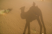 India, Rajasthan, Jaisalmer, shadow of a camel trekking in the sand dunes of the Kanoi region (near the border with Pakistan)