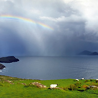 Dramatic Irish Landscape with Stormy Weather and Rain Shower over Ballinskelligs Bay with colourful Rainbow. Group of Sheep on Green Grass Field with Fishermen Boat and the wild Atlantic Cliff Coastline, County Kerry, Iveragh Peninsula Ireland / bs003<br /> <br /> Shot on old equipment using a very grainy film.