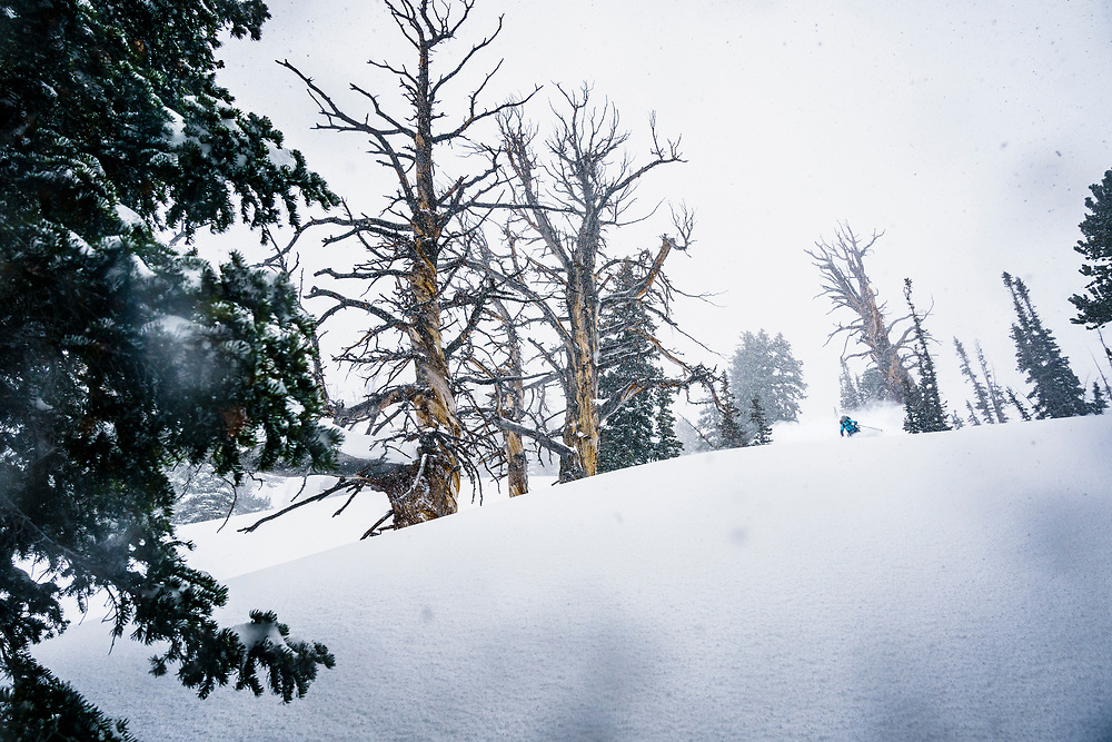 More trees please! Kaylin Richardson finds her happy place in the trees of the Central Wasatch Range, Utah.