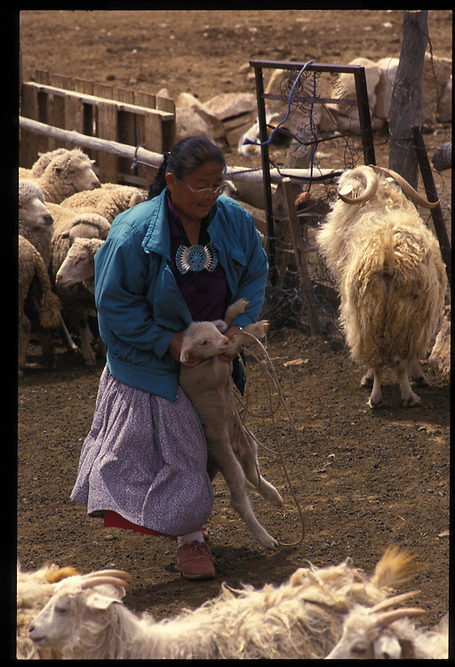 Mary Lane of Bodaway, who missed out on an education, separates ewes from newborn lambs.  Many Navajos hope education will spare their children such weary toil.
