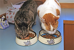 Two Cats Eating Together