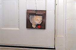 Cat Coming Through Cat Door
