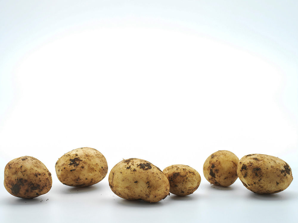 Line of dirt covered Agria potatoes on a white background.