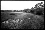 Natural Wetland near Sarasota, Florida