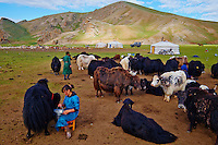 Mongolie, province de Bayankhongor, campement nomade, Uyang Batbaatar, 22 ans, traite des yaks // Mongolia, Bayankhongor province, nomad camp, Uyanga Batbaatar, 22 years old, time to milk the yak