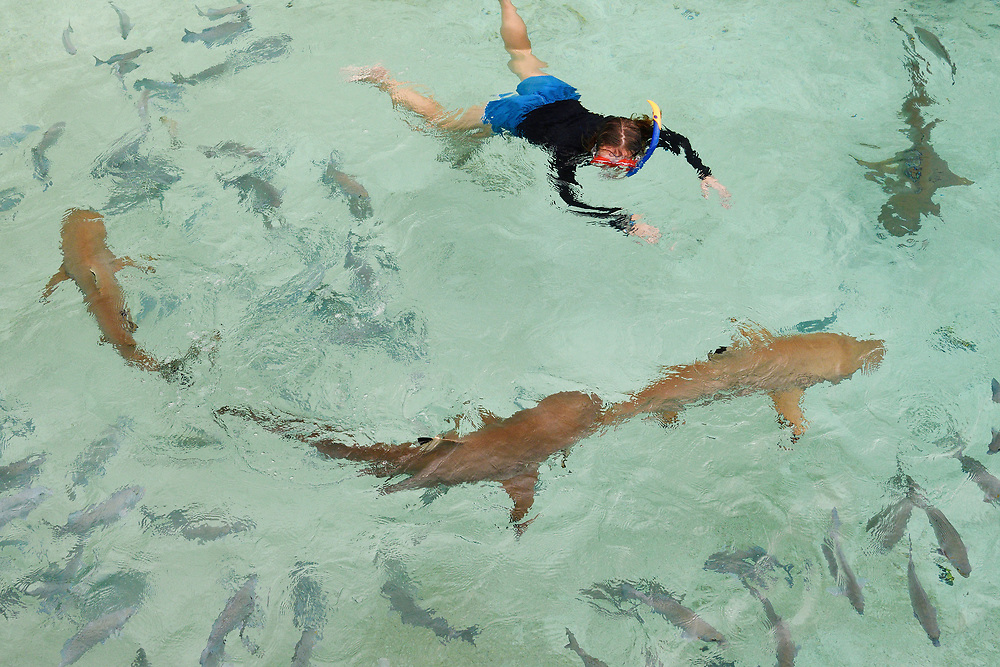 """Marine biologist Emilia d'Avack swimming with Blacktip reef shark (Carcharhinus melanopterus) Raja Ampat, Western Papua, Indonesian controlled New Guinea, on the Science et Images """"Expedition Papua, in the footsteps of Wallace"""", by Iris Foundation"""