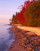 Silver maples, Acer saccharinum, providing autumn red along the Keweenaw Peninsula shore of Lake Superior near Betsy, Upper Peninsula of Michigan.