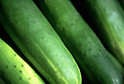 Close up photo of a group of cucumbers on a table.