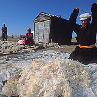 MONGOLIA, Darhad Valley,Dorjgo, a former veterinarian-turned-herder pounds wool to make felt for the walls of his ger (yurt)