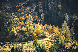 THEMENBILD - herbstlich verfärbter Wald, aufgenommen am 13. Oktober 2019 in Saalbach Hinterglemm, Oesterreich // autumnal forest, in Saalbach Hinterglemm in Austria on 2019/10/13. EXPA Pictures © 2019, PhotoCredit: EXPA/Stefanie Oberhauser