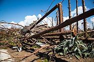 Trees split in half fallen on home in Mexico Beach, Florida durring Hurricane Michael.