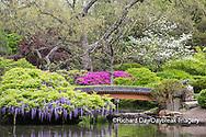 65021-03616 Japanese Garden in spring,  Missouri Botanical Garden, St Louis, MO