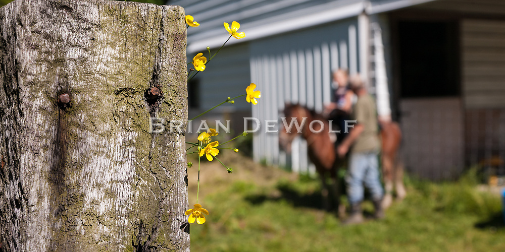 Flowers on a  fence post frame a memorable country moment for an eight-year old city girl.