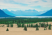 Carcross Desert - affectionately known as the World's Smallest Desert. The Coast Mountains. and Bennett Lake in the background.<br />