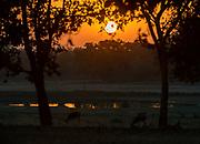 Sunset in Kanha National Park, Madhya Pradesh, India.