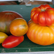 "The dark green tomato is called the ""Paul Robeson"", grown at Verrill Farm in Concord, MA USA"
