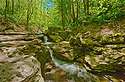 Deciduous forest surrounding Louth Falls in spring<br />Jordan<br />Ontario<br />Canada