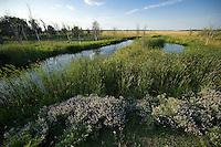 Hortobagy landscape with saline lake, Hortobagy National Park, Hungary