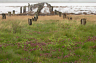 lines of remaining pylons from the abandoned bridge across Crockett Lake, Fort Casey, Whidbey Island, Puget Sound, WA